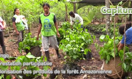 Reforestation avec Ishpingo (Equateur)